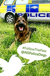 Follow @NSPoliceDogs