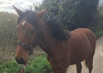 Stolen horse felthorpe